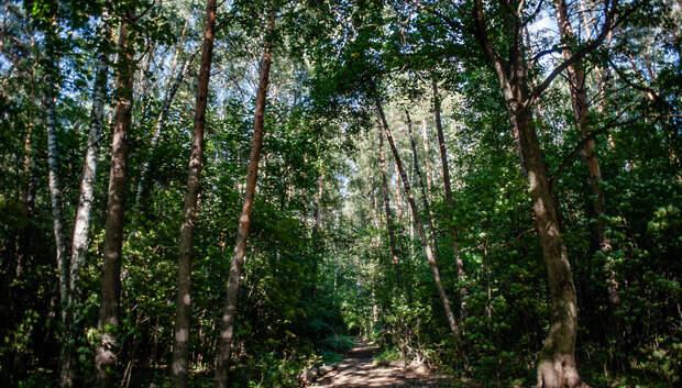 Более 130 нарушений лесного законодательства выявили в Подмосковье за неделю
