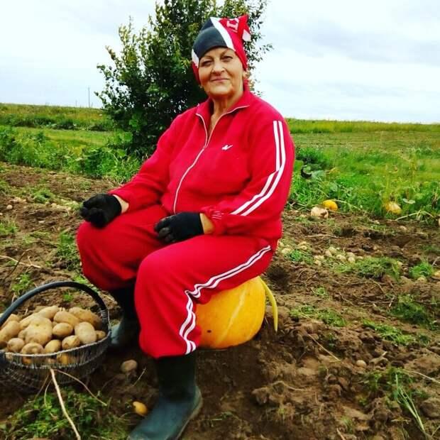 Беларусы капаюць бульбу бульба, работа, соцсети, фото