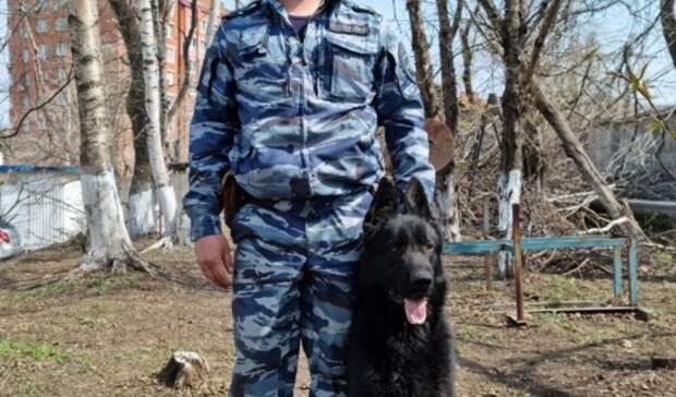 ВоВладивостоке заигравшегося ребёнка нашли спомощью немецкой овчарки