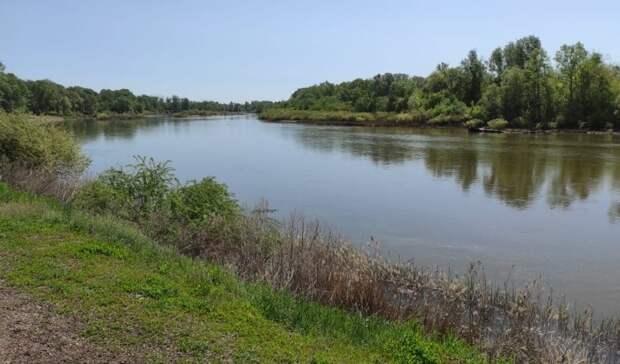 Вмэрии Оренбурга рассказали овырубке деревьев при благоустройстве Набережной Урала
