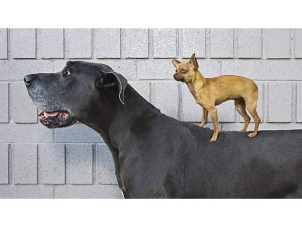 Две истории одомашнивания собак и кошек
