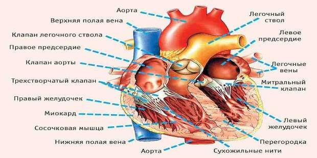 10 симптомов, указывающих на серьезные проблемы с сердцем! Очень ценная информация, которая может спасти здоровье ваших близких!