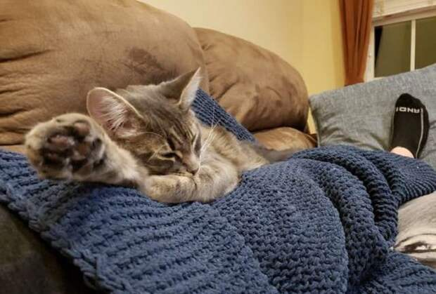 Кошка лежит на пледе