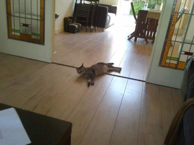 Он забыл закрыть дверь заднего двора, и в следующую минуту.. встреча, гости, дружба, животные, коты, кошки, неожиданно, фото