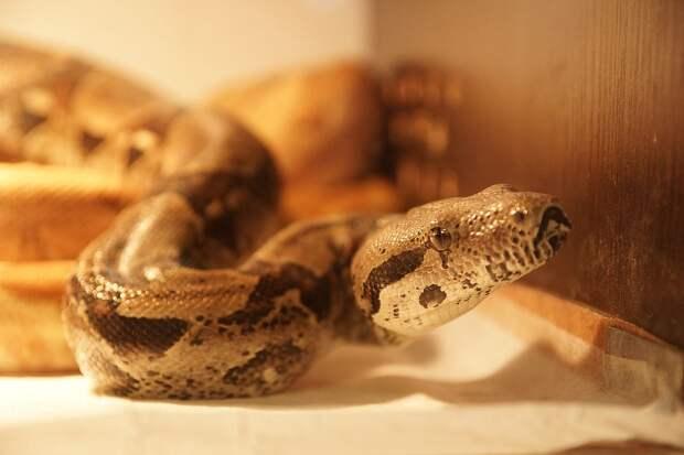 Главное - не паниковать при виде змеи Фото: Светлана МАКОВЕЕВА