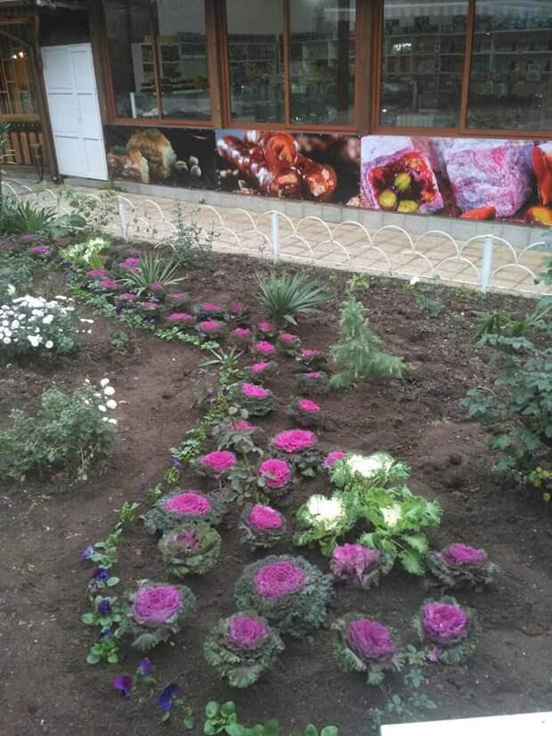 Ялта выделила миллион рублей на зимние цветы