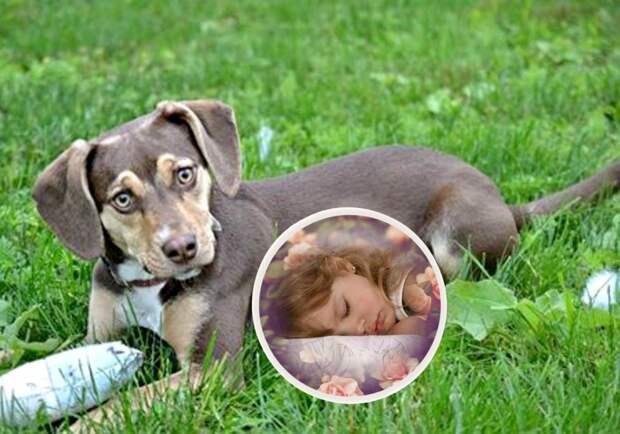 Удивительная собака чудом спасла малышку, замерзавшую в поле. Умничка! :)