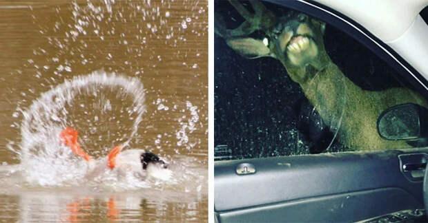 17 фотографий животных, некоторые из которых настолько ужасны, что даже забавны