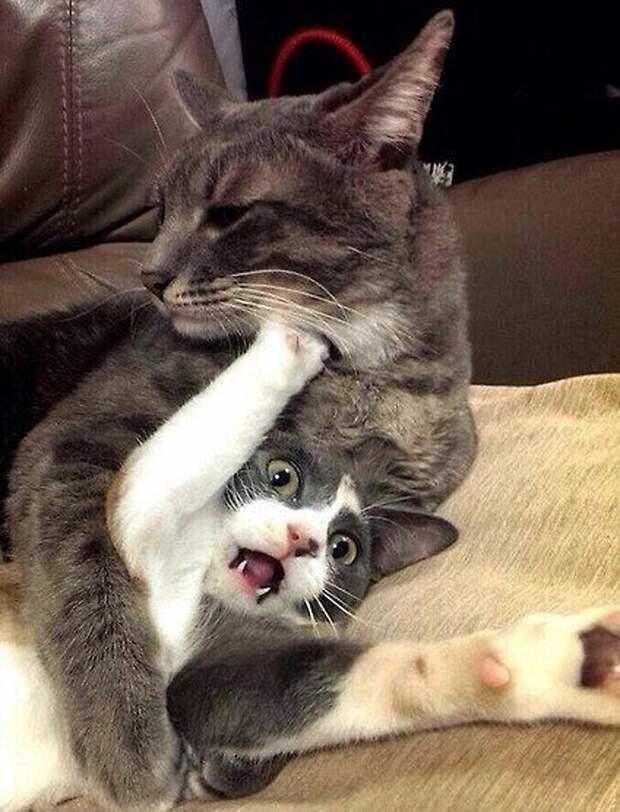 Эта кошка запросто прошла бы пробы для съемок в триллере гифки, коты, фото