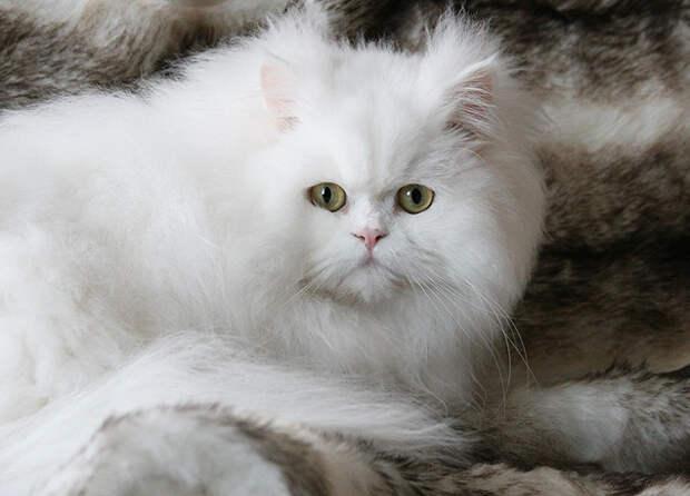 Любимец был здоров, но закормлен без меры: как мыши Снежка от депрессии излечили