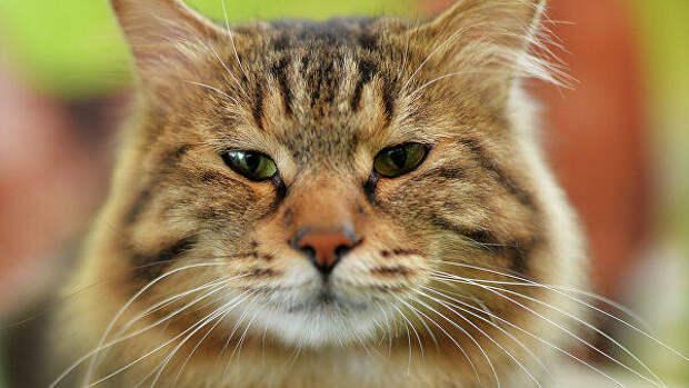 В Туве энергетики спасли кошку, просидевшую четыре дня на опоре ЛЭП