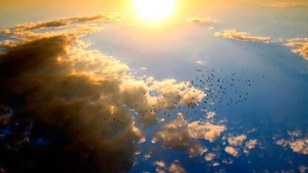 Ученые выяснили, как маленькие певчие птицы пересекают большие расстояния