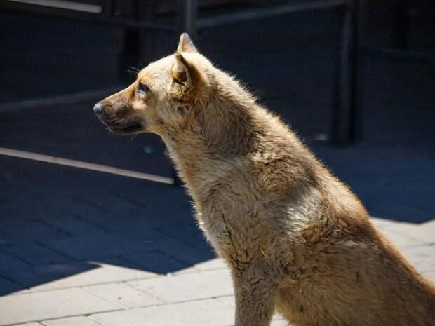Районы Забайкалья в 2021 году получили на отлов и содержание собак 29 млн рублей