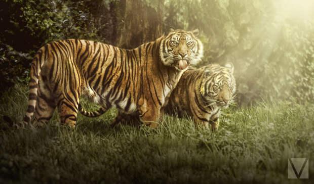 Животные с характером: серия работ Вики-Лии Болтер