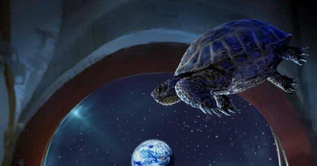 Черепахи в космосе