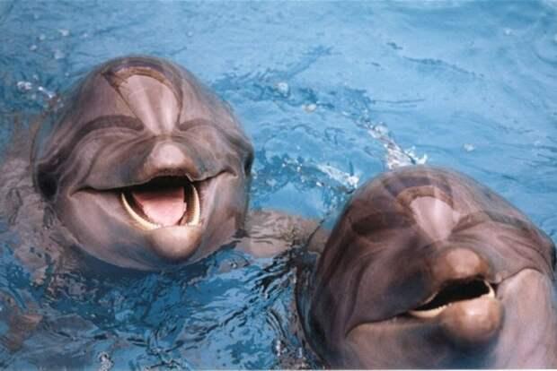 5 заблуждений, из-за которых мы до сих пор верим, что дельфинарии — хорошее развлечение