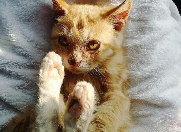 Котенок на собачьей мясной ферме был так голоден, что ел даже грязь