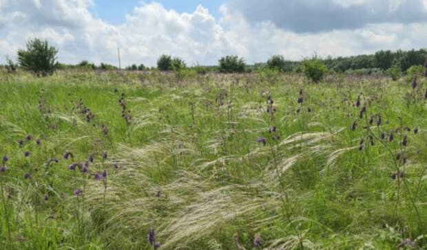 Экомаршрут по территории заказника «Горненский» откроют 18 июня