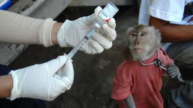 «Обезьянья вакцина» как символ гонки «противовирусных вооружений»