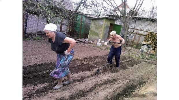Если у тебя есть огород, то на пособие по бедности ты претендовать не можешь, — так считают чиновники в некоторых регионах России