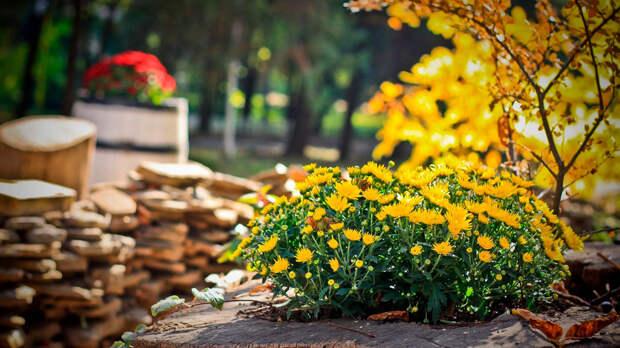 Садовый участок в ноябре: какие работы нужно успеть провести до зимы