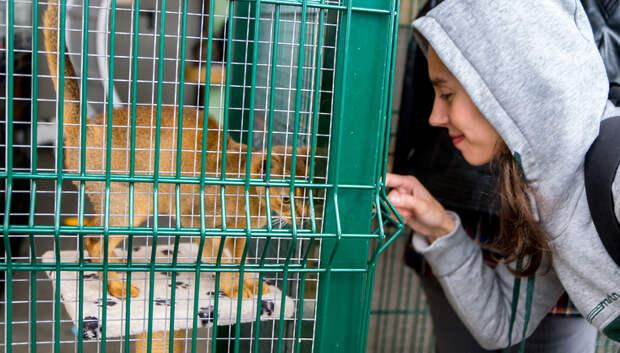 Центр реабилитации животных «Юна» проведет экскурсию онлайн в четверг