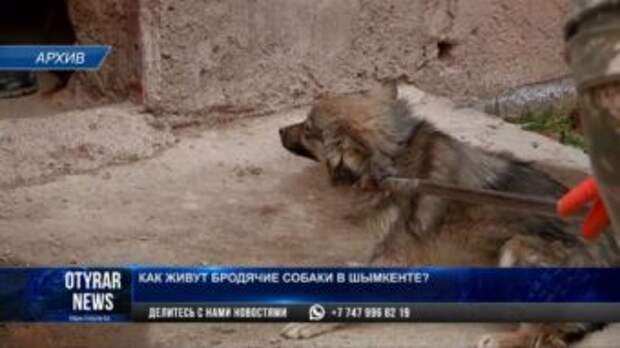 Как живут бродячие собаки в Шымкенте?