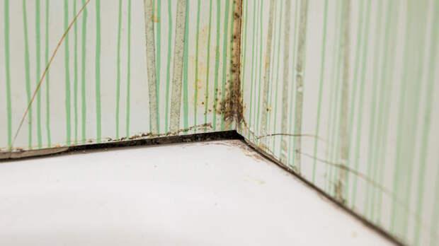 Россиян предупредили об опасности плесени на стенах квартиры
