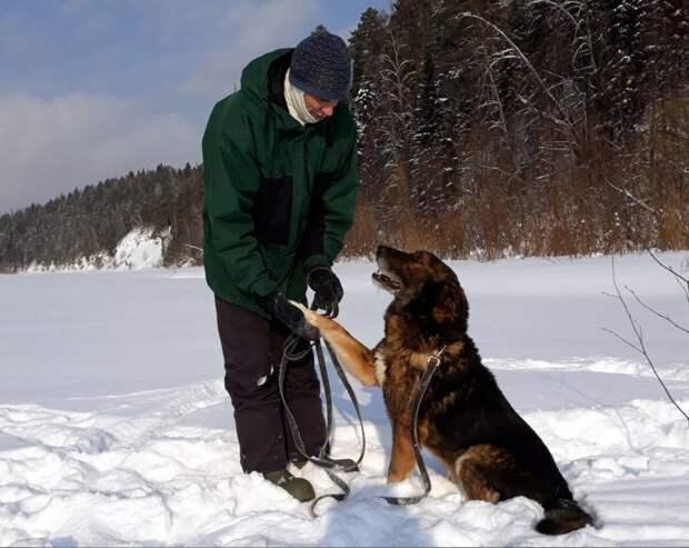 Полуслепую собаку бросили в лесу. Его спасли и из тощего старичка он превратился в красавца