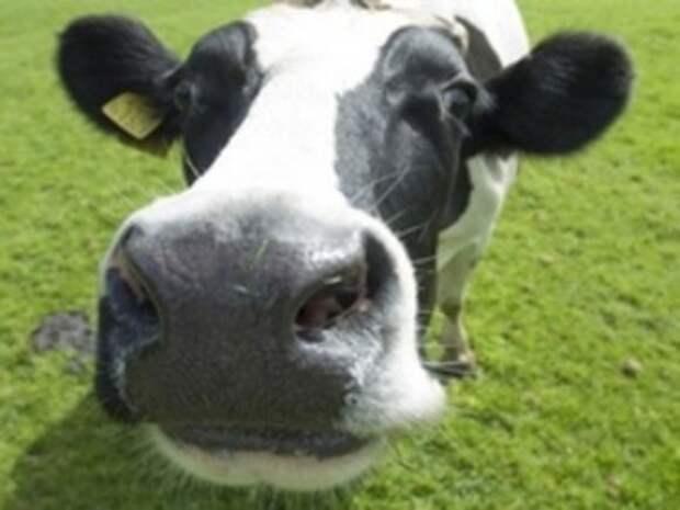 Зоозащитницы провели у Минсельхоза «обнаженную» акцию в защиту коров