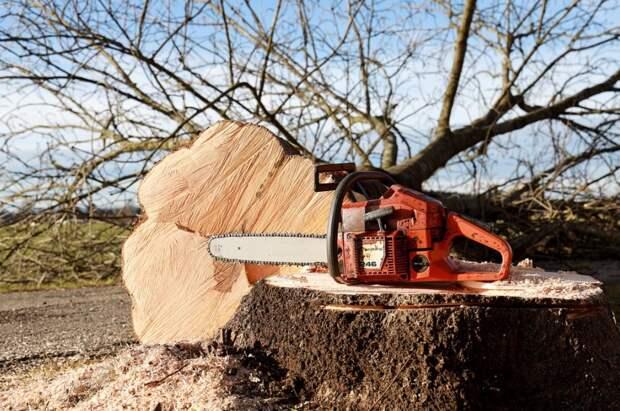 Чиновник из Ялты не зафиксировал вырубку деревьев на 6 млн рублей