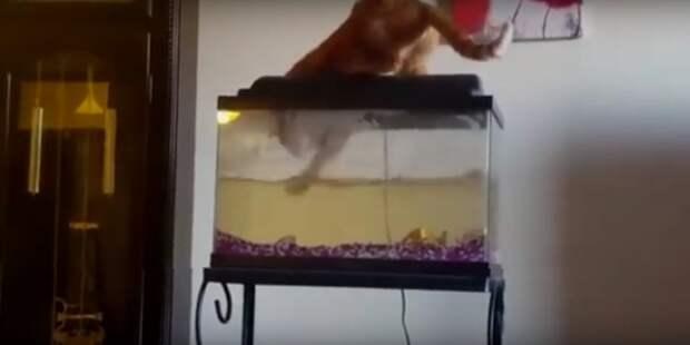 Любопытные коты и аквариумы… Изведать недоступное!