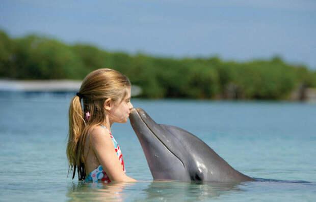 У дельфинов слабое обоняние, но отличный слух