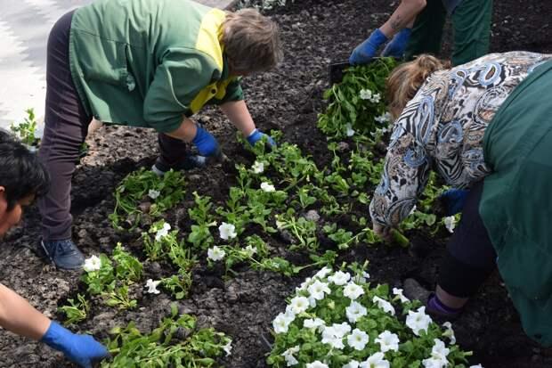 В Тамбове продолжается масштабная высадка цветов