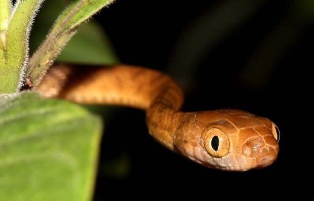 На родине эта змейка не хулиганит лишь потому, что там большая конкуренция.