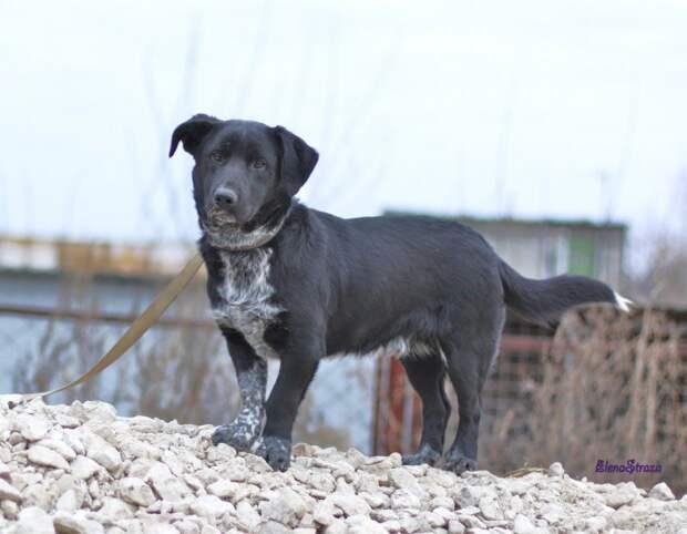 Растерянный пес бегал по рынку, волоча за собой поводок маленькая собака, пес, черный пес