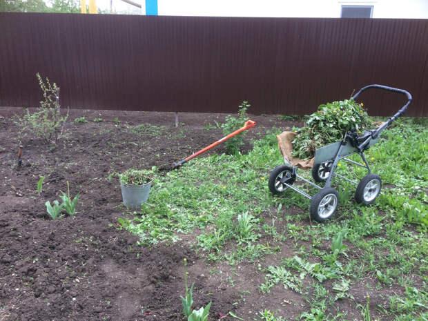 Второй год сажаю огород на Кубанской земле.