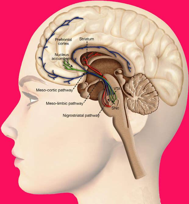 Массаж головы при гипертонии...