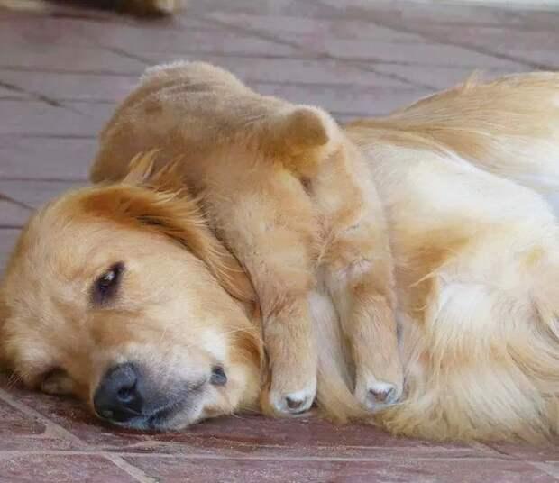 «У нас будет детёныш!»: 20 фото животных, ставших счастливыми родителями! :)