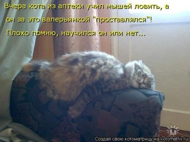 Новая котоматрица (44 шт)
