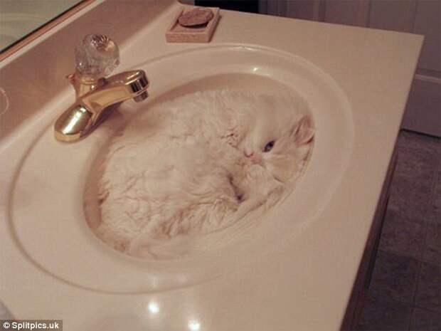12. Как известно, кошки заполняют весь предоставленный им объем домашние животные, коты, кошки, маскировка, маскируется, прятки, смешные кошки