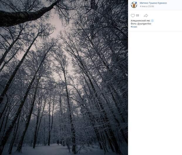Фото дня: зачарованный лес