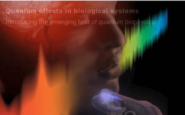 Биологи: фотоны связывают организм в одну квантовую систему