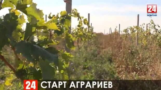 Более 400 крымских аграриев за четыре года получили грантовую помощь