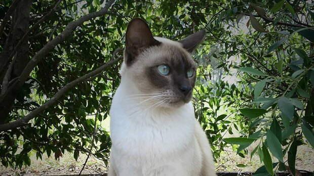 Особенные кошки: топ-5 пород с характером собаки