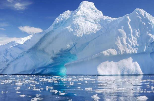 Останки лягушки впервые нашли в Антарктиде
