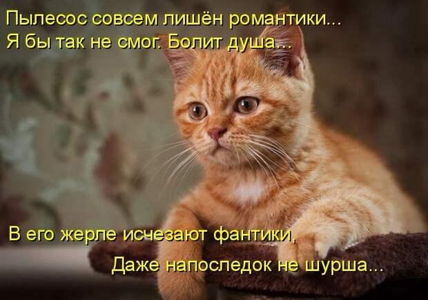 1450431499_kotomatrica-26