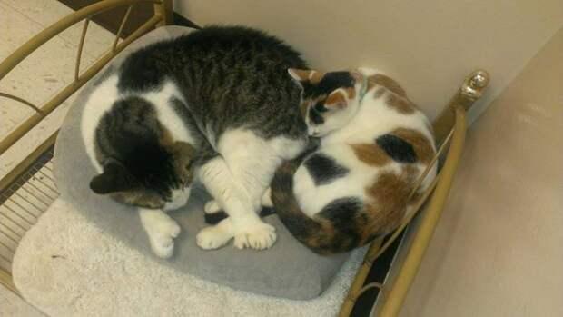 Кот по кличке Ван Гог выжил и нашел хозяев после того как лишился части головы вместе с ухом