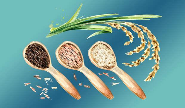 Гликемический индекс риса —действительно ли его можно уменьшить?