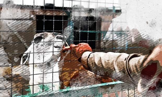 Не все орловские зоопарки могут продолжить работу в следующем году